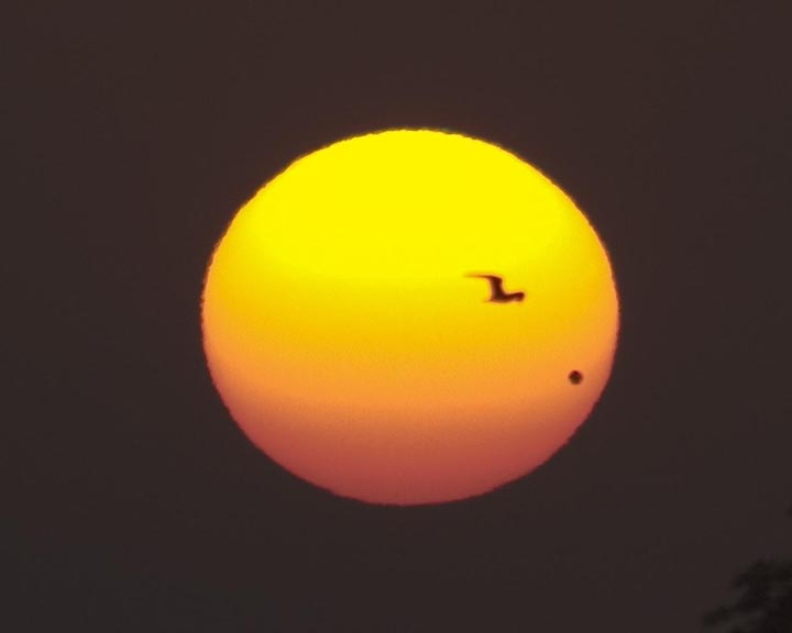 Venus and a bird transiting in front of the Sun. We can use alignments like this to study the atmospheres of other planets by looking at how sunlight/starlight filters through them.